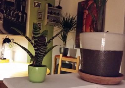 Pflanzen-shoppen